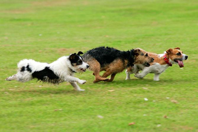 три собаки бегут по полю