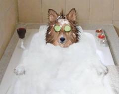 собака расслабляется в ванне с пеной с огурцами на глазах