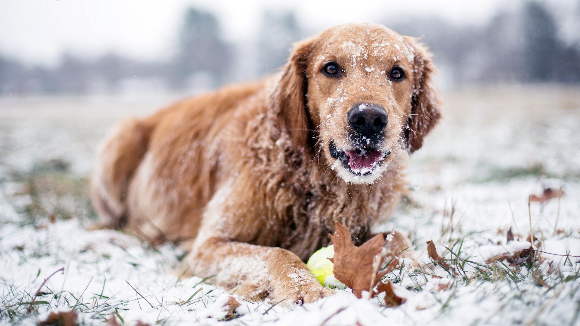 Зимний период: чем опасны холода?