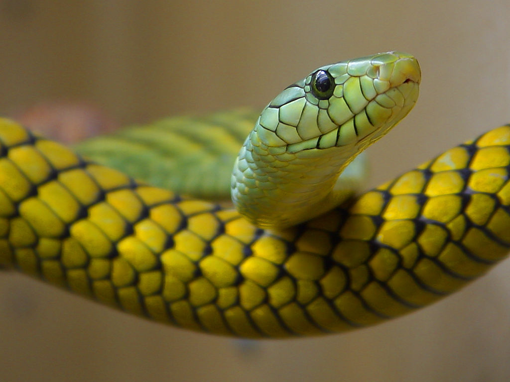 Рептилии в домашних условиях