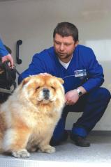 Интервью с ветеринарным врачом вызовной службы