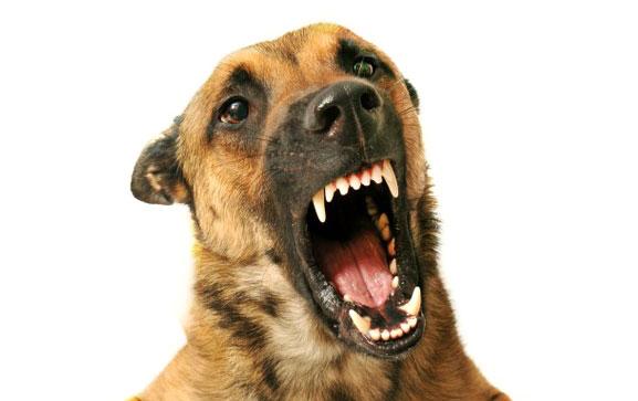 собака с раззинутой пастью