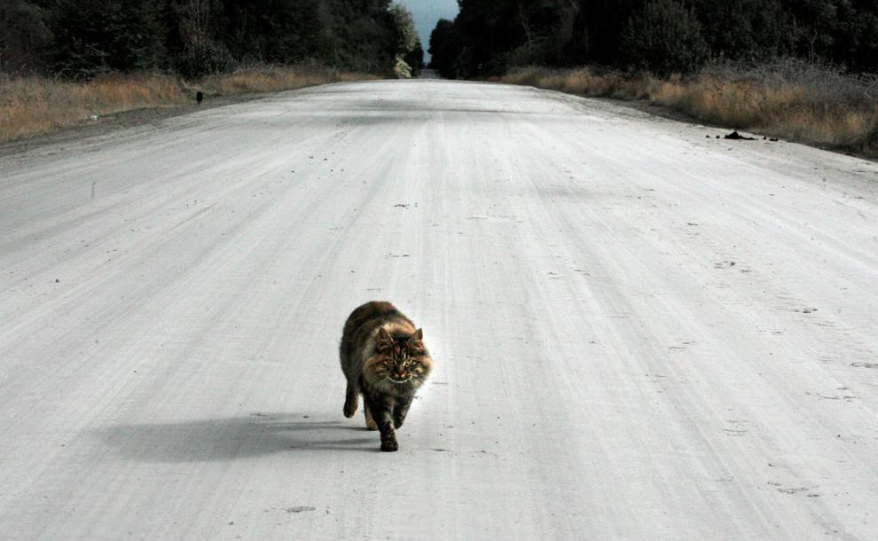 Животное попало под колёса авто: что делать?