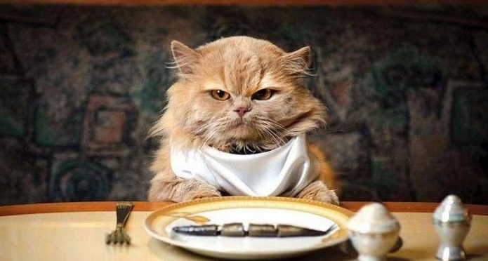 Рацион кошки: как кормить, но не перекормить любимца?