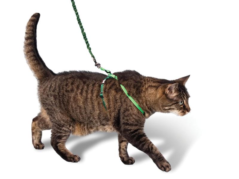 Как выгуливать кошек на улице и дома?