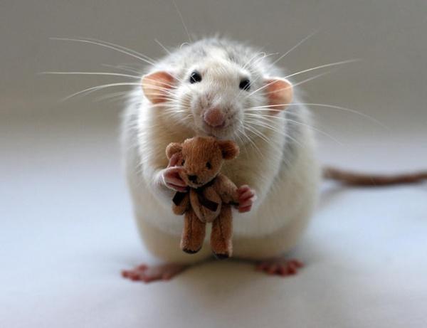Домик для крыски