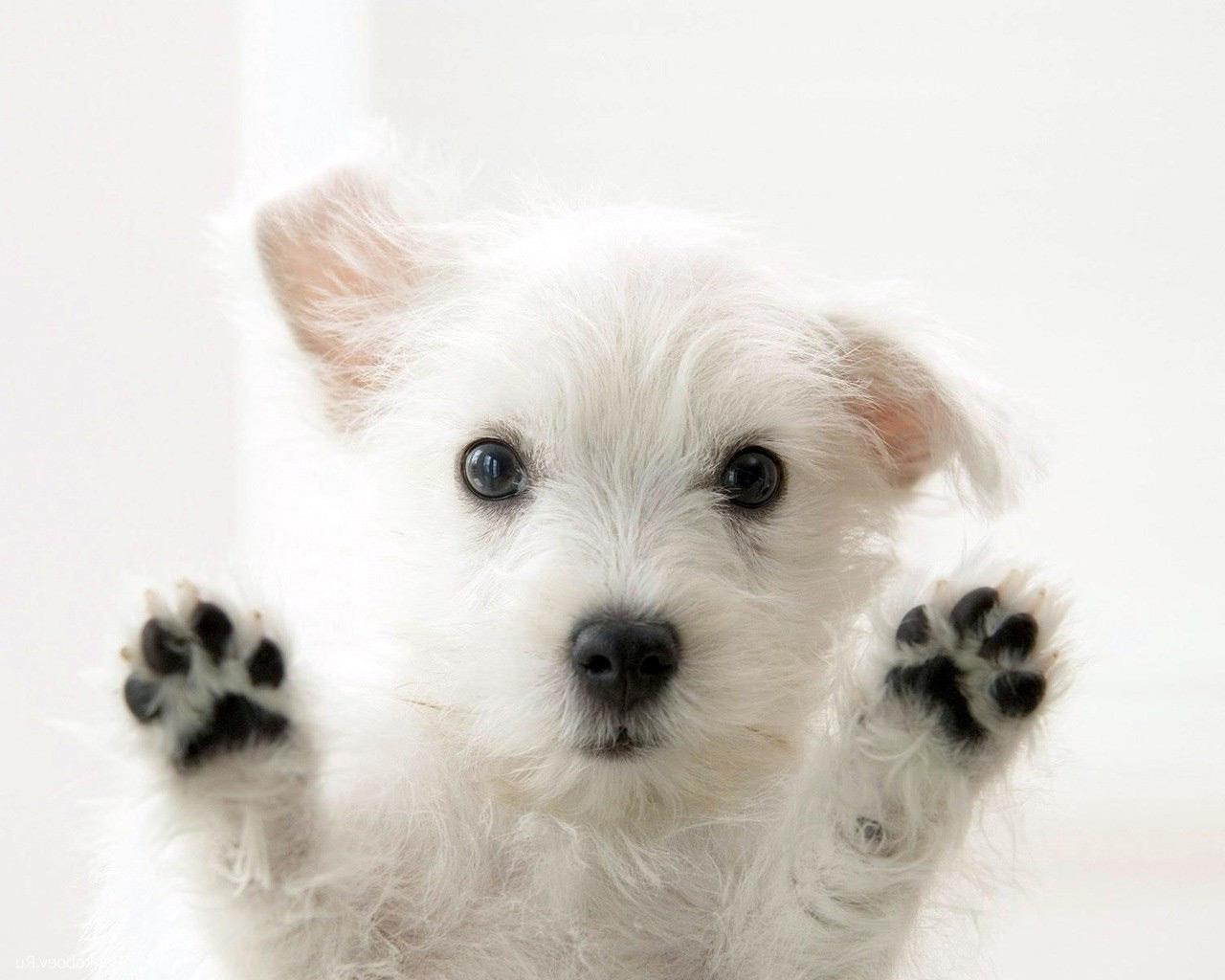 белый щенок с лапками вверх
