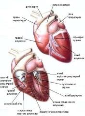 «Больное сердце» и наркоз