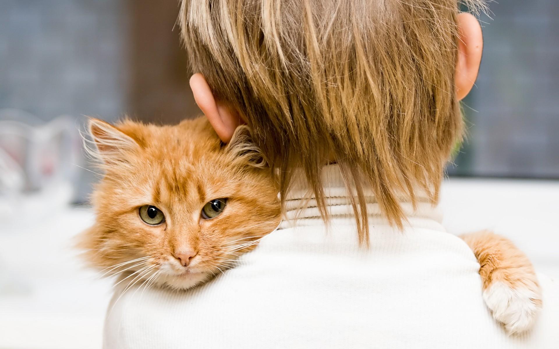 ребенок держит рыжего кота