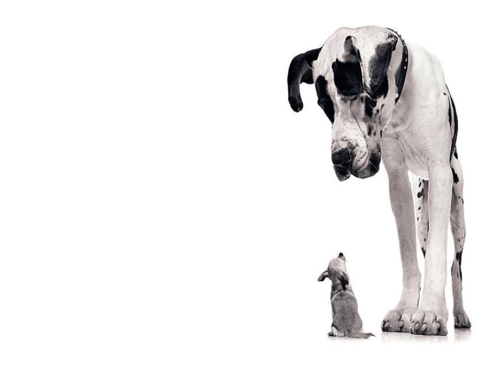 Щенок-гигант: как правильно вырастить собаку гигантской породы?