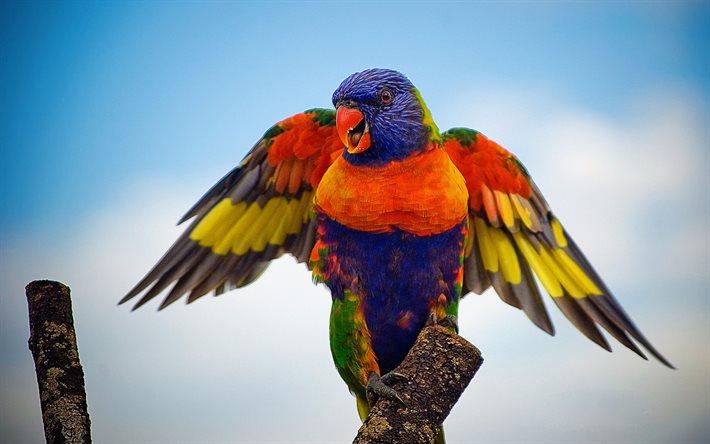 попугай крылья