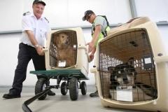 Изменения в правилах транспортировки животных.