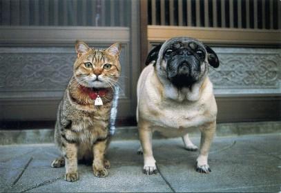 cat-dog-1