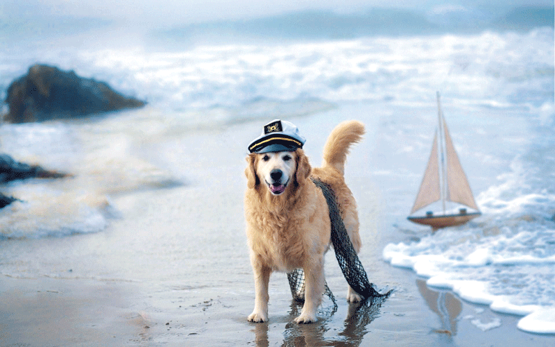 Dog_Sea_Ship_Beach_Wallpaper