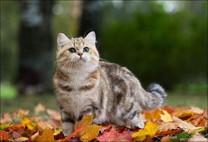 Календар власника тварини. Вересень