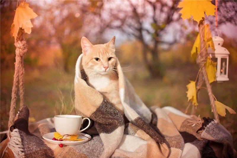 Ноябрь. Календарь владельца животного