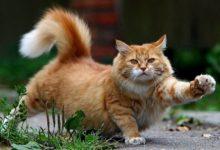 Різноманітне довкілля для котів. Міф чи необхідність?