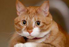 Лимфома кишечника у кота!