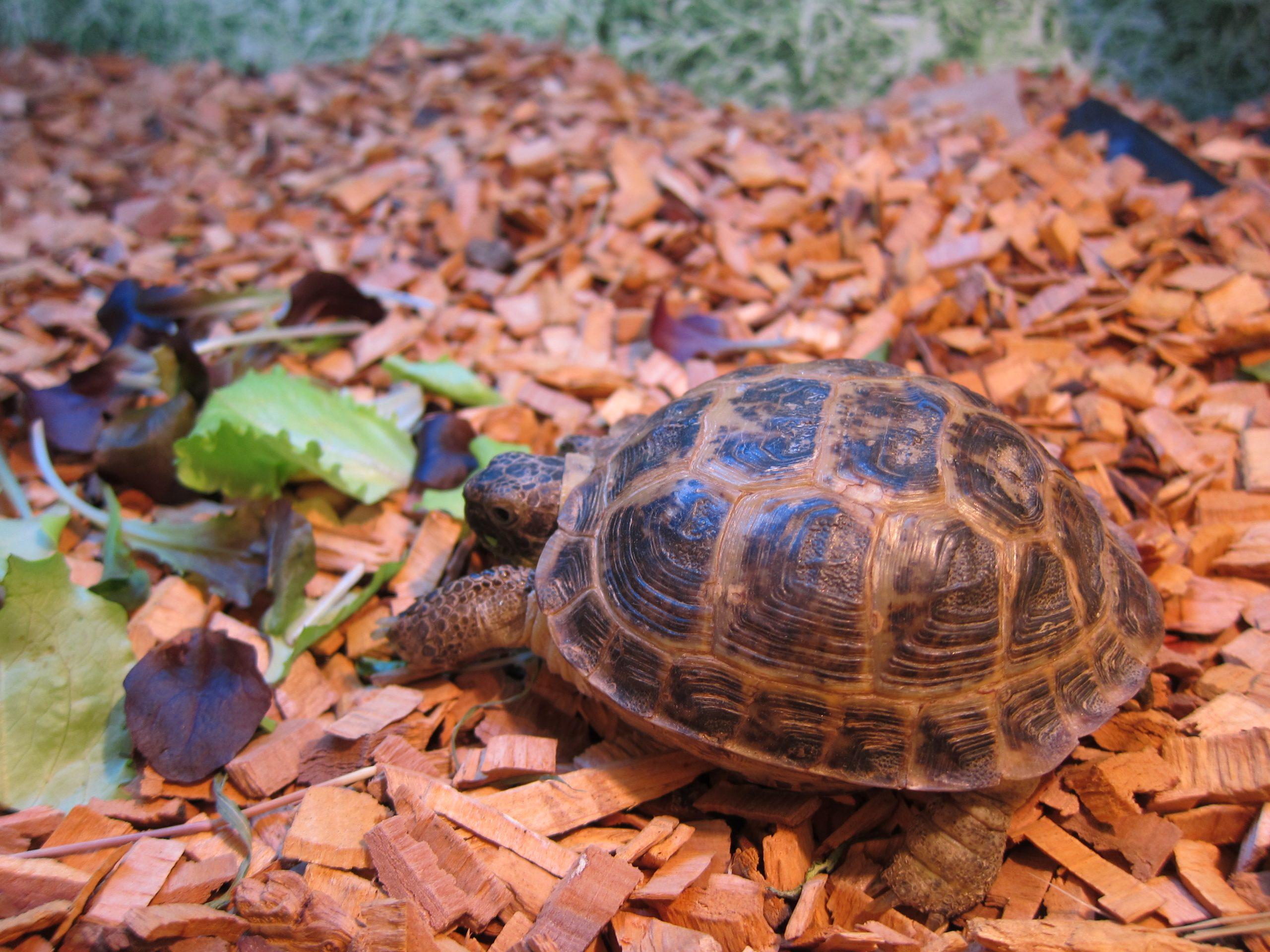 Черепаха дома: зимние проблемы и их решения!