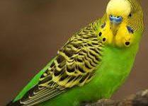 Открыт современный стационар для экзотических животных и птиц!