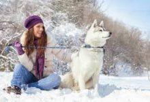 Декабрь – Январь. Календарь владельца животного.
