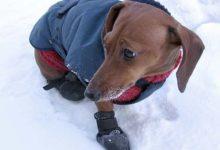 Уход за лапами собаки зимой!