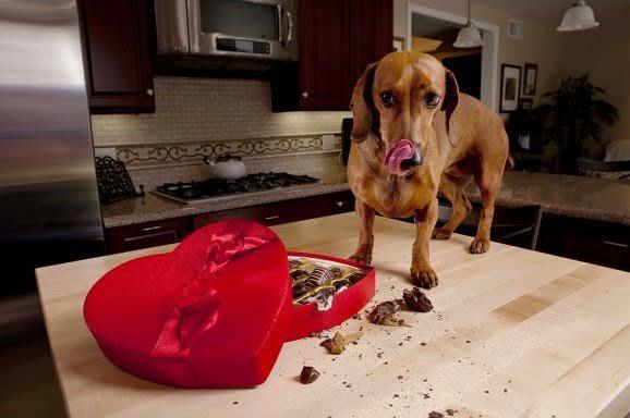 Контроль рациона собаки в предновогодние праздники!