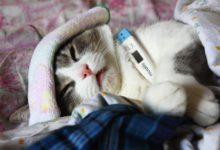 Гипотермия у котов: причины и последствия нарушения теплообмена в организме