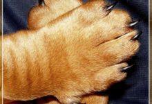 Зачем и как стричь собак зимой?