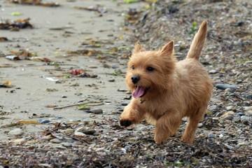 Случай в клинике: щенок, пострадал от того, что любит гулять, уткнувшись носом в землю