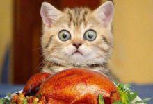 Последствия неправильного питания котят: алиментарный вторичный гипопаратериоз