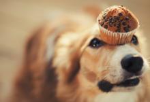 Шоколад – яд для питомца: храните сладость вне досягаемости животного!