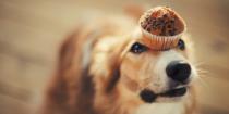 Шоколад — яд для питомца: храните сладость вне досягаемости животного!