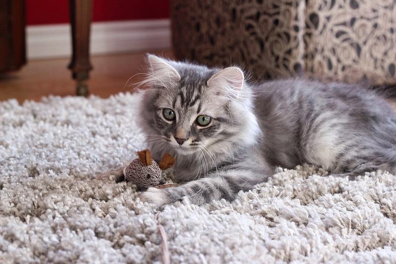 Панлейкопения у кошек. Симптомы и советы специалистов