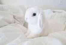 Декоративные кролики: плюсы и минусы