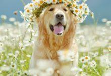Собака весной: на что следует обратить внимание?