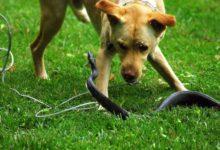 Совет ветеринара. Скорая помощь при укусе змеи