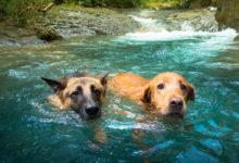 Безопасность на воде. Рекомендации ветеринара