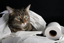 Мочекаменная болезнь котов