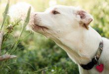 Домашние растения – яд для животных