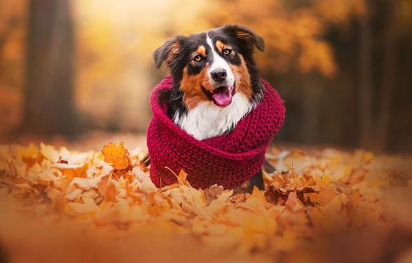 Загострення інфекційних захворювань собак восени