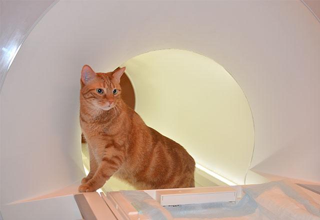МРТ у ветеринарії – нові діагностичні можливості