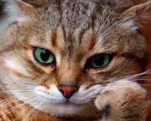 Психологія котів. Коти в сучасному світі