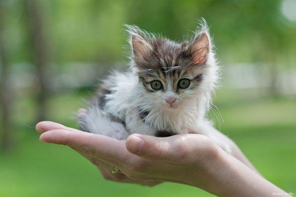 Кошеня з вулиці. Перші кроки та перші дії