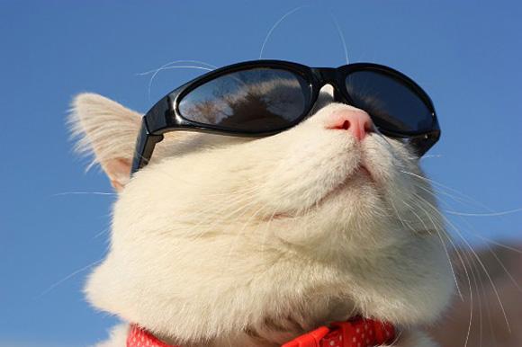 Хвороби очей котів