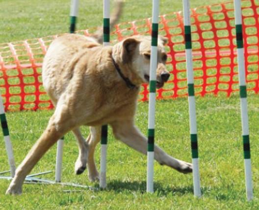Реабілітація собак