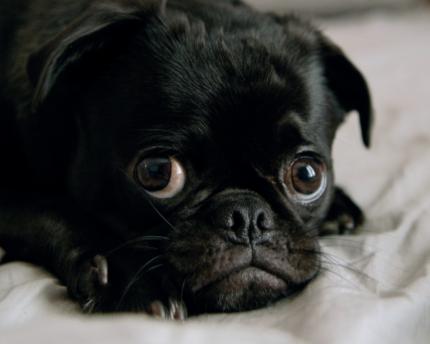 Вірусні захворювання, або чому потрібно вакцинувати собак