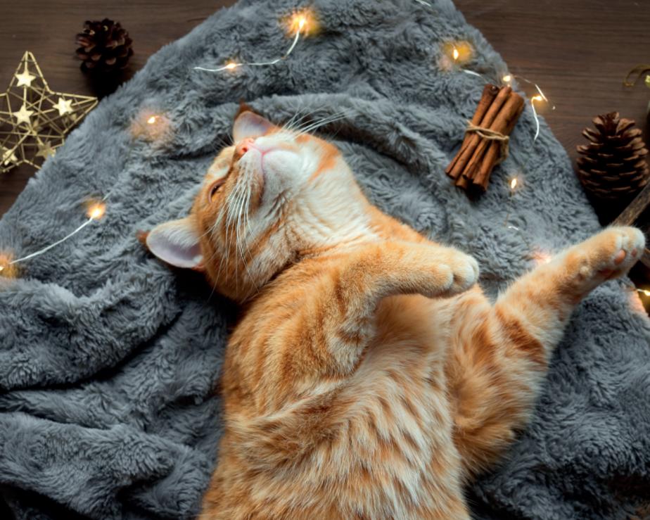 Породні особливості патологій серця свійського кота