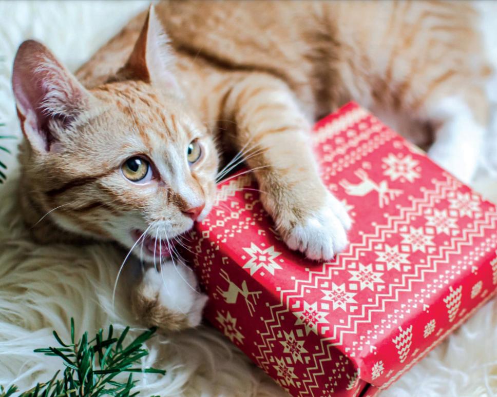 Коти і новорічні травми. Як уберегти улюбленця?
