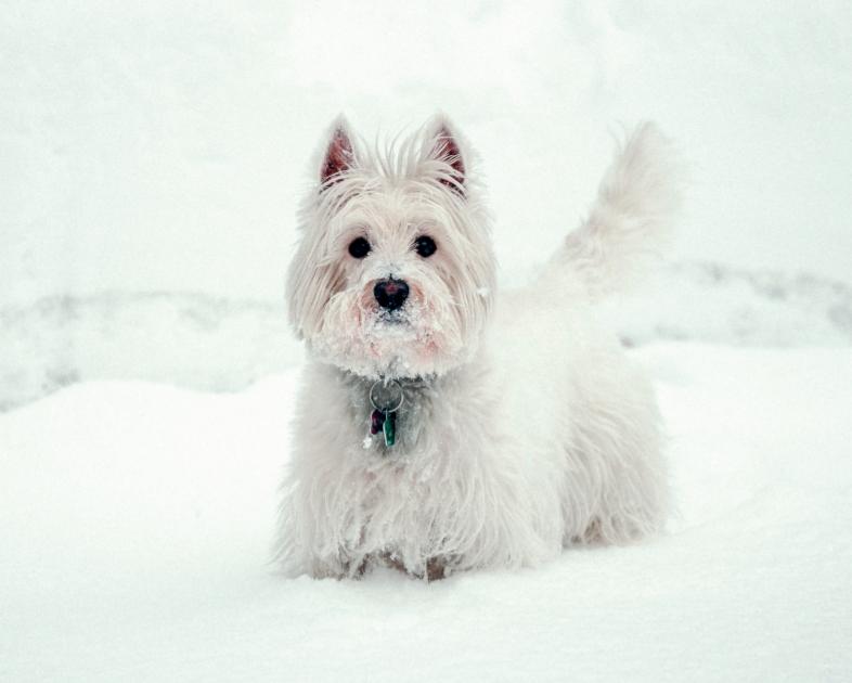 Зима та тварини. Підготовка до зими